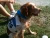4/10/2012 - Campestre canina